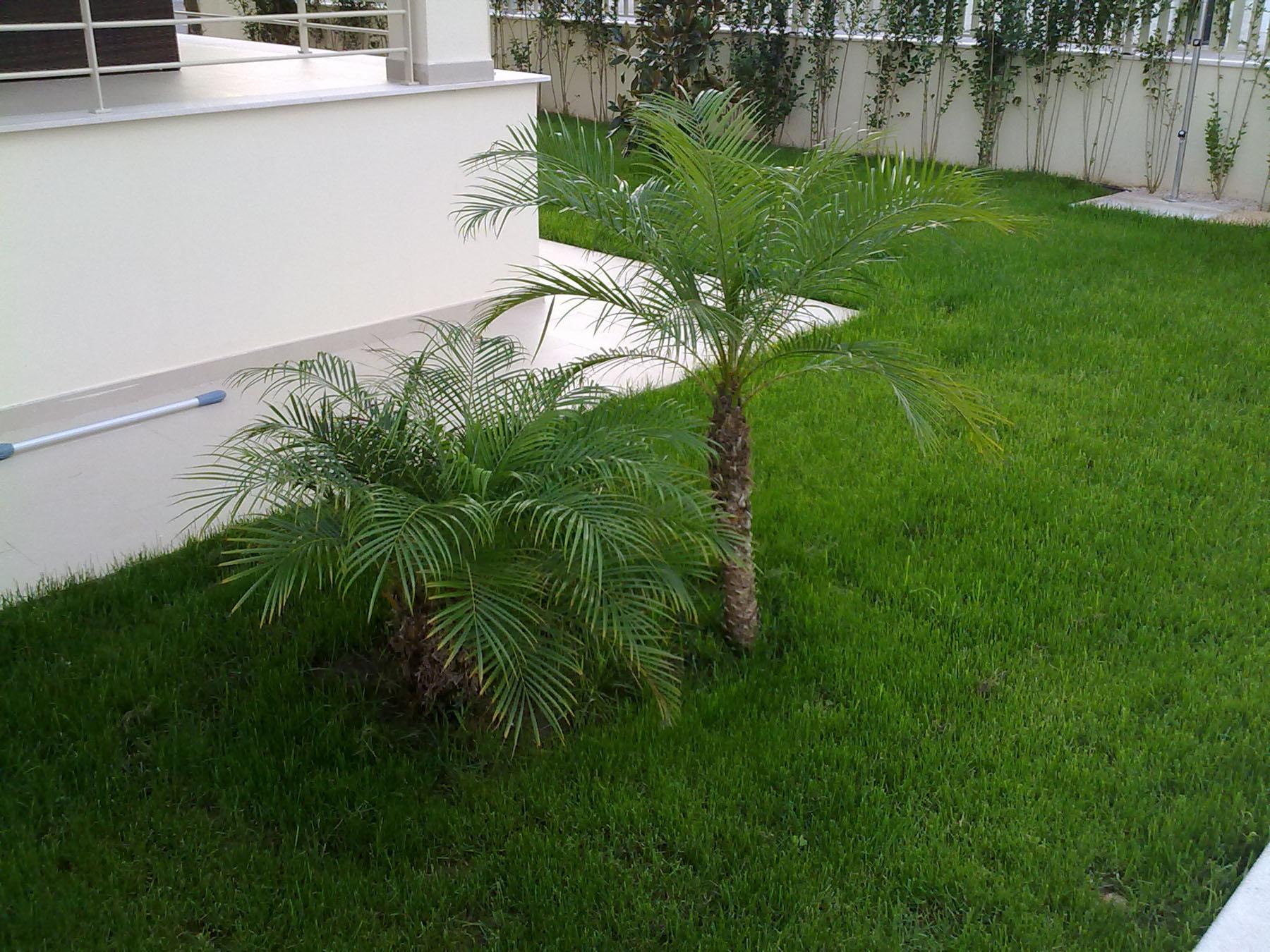 Dise o y mantenimiento de jardines jarditec for Mantenimiento de jardines